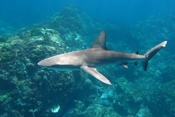 Things you didn't know about Sharks